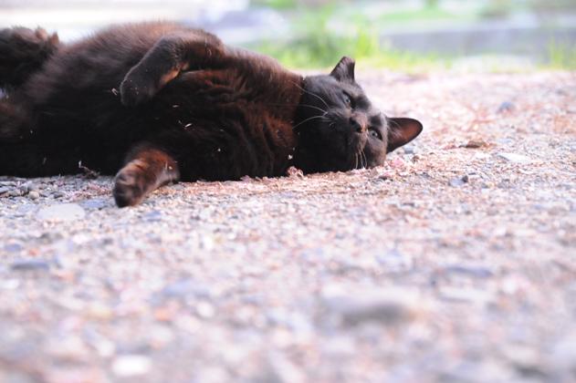 黒猫ゴロゴロ
