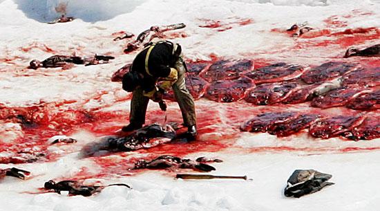 seal-hunt-2.jpg