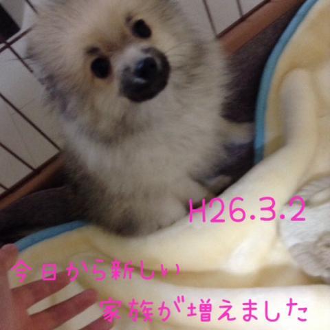 IMG_2718[1]_convert_20141027132457
