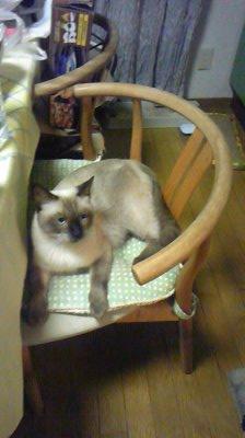椅子の上ジャムImage9041