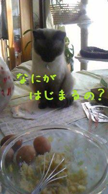 Image11031.jpg