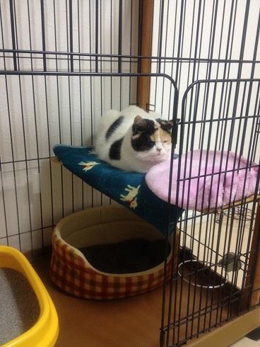 ひとの寝床を横取りする猫