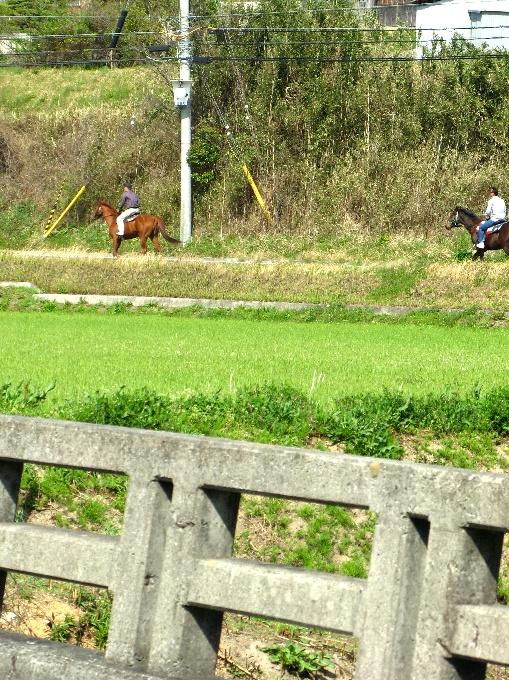 2013-4馬の散歩