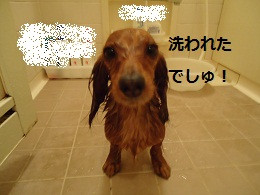 DSC01465.jpg