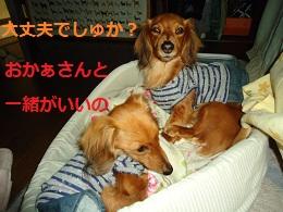 DSC01576.jpg