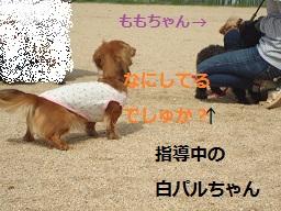 DSC02064.jpg