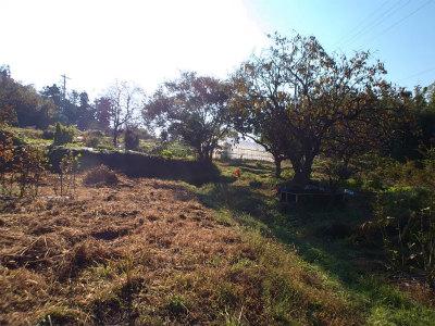 10.26朝の畑1
