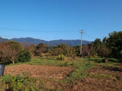 10.26秋晴れの畑