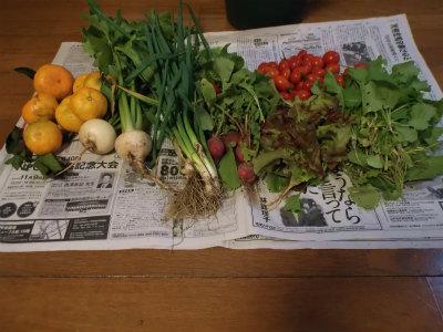 10.30収穫