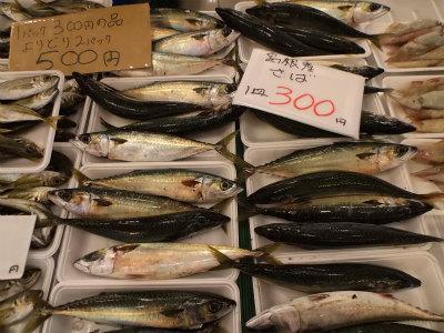 11.1魚が安い4