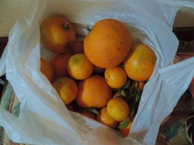 11.22採って来た柑橘類