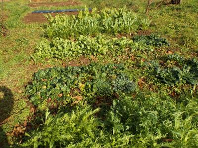 12.6露地野菜