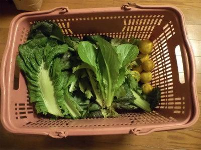 12.14収穫した野菜