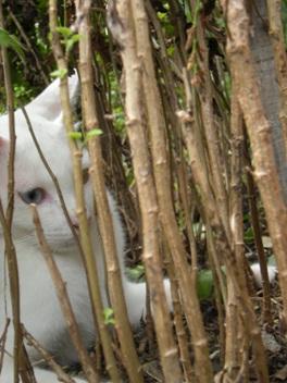 竹やぶのトラ?