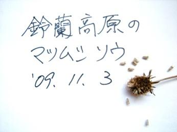 5マツムシソウ・種