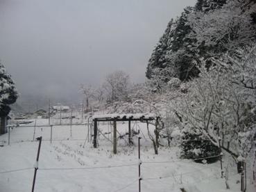 1-1雪積もった!