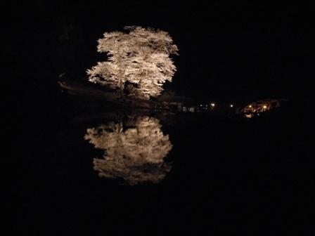 4-3夜桜