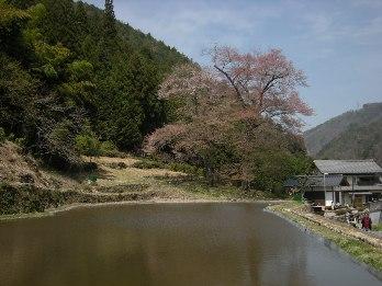 nawasiro4.jpg