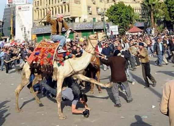 Never_Tease_a_Camel__11.jpg