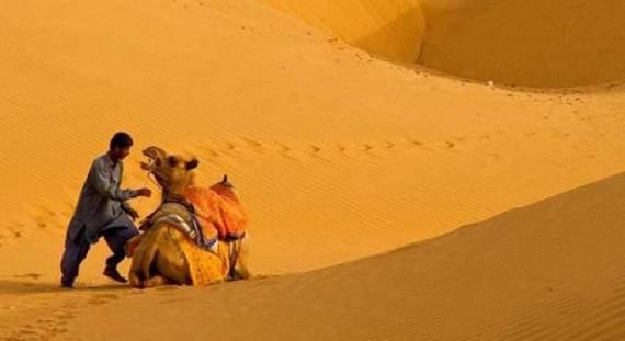 Never_Tease_a_Camel__12.jpg