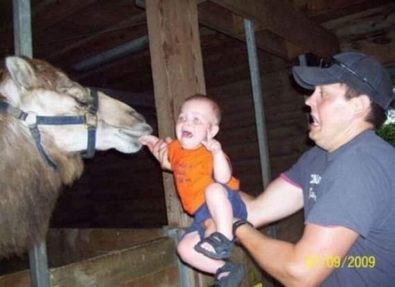Never_Tease_a_Camel__2.jpg