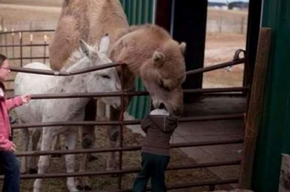 Never_Tease_a_Camel__4.jpg