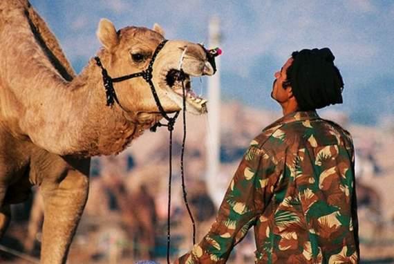 Never_Tease_a_Camel__9.jpg
