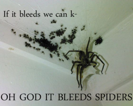funny-spiders01.jpg