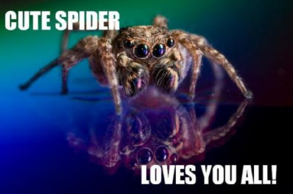 funny-spiders08.jpg