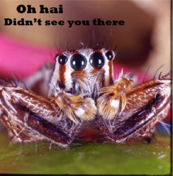 funny-spiders10.jpg