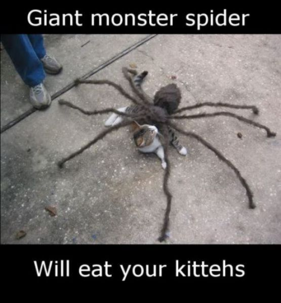 funny-spiders11.jpg