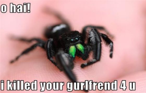funny-spiders12.jpg