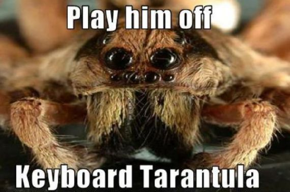 funny-spiders13.jpg