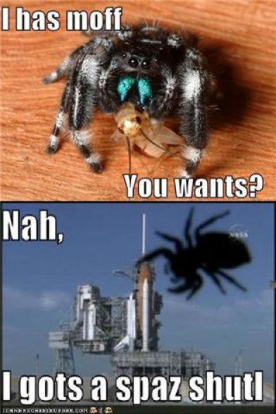 funny-spiders15.jpg