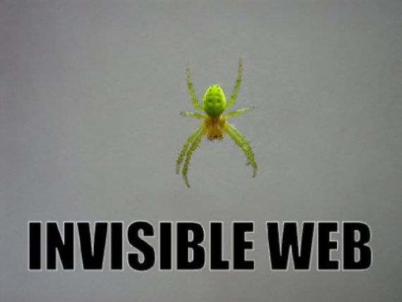 funny-spiders23.jpg