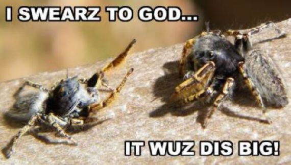 funny-spiders24.jpg