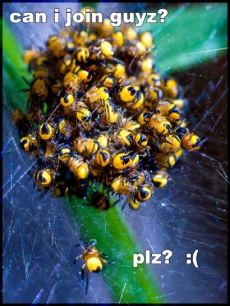 funny-spiders26.jpg