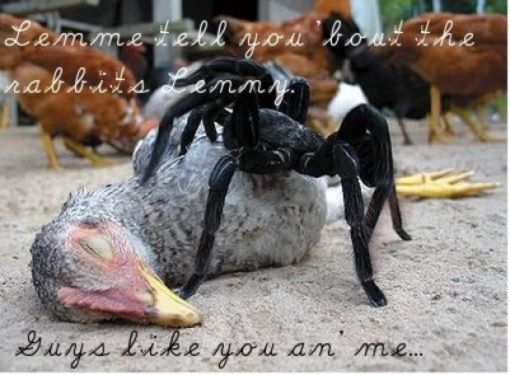 funny-spiders27.jpg