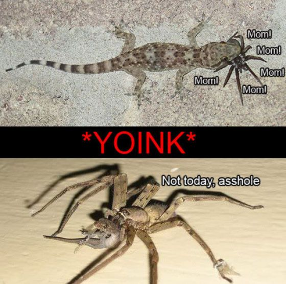 funny-spiders31.jpg