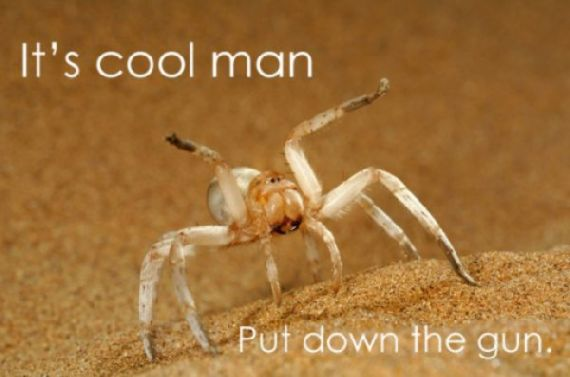 funny-spiders32.jpg