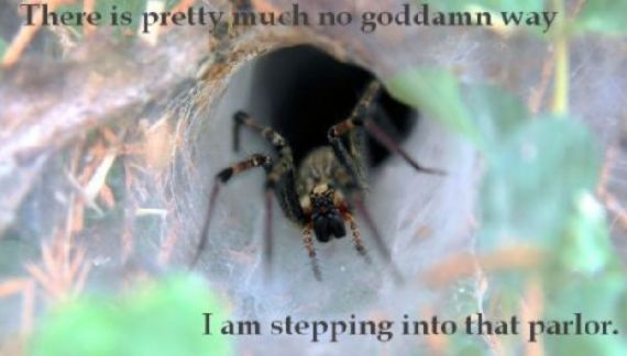funny-spiders33.jpg