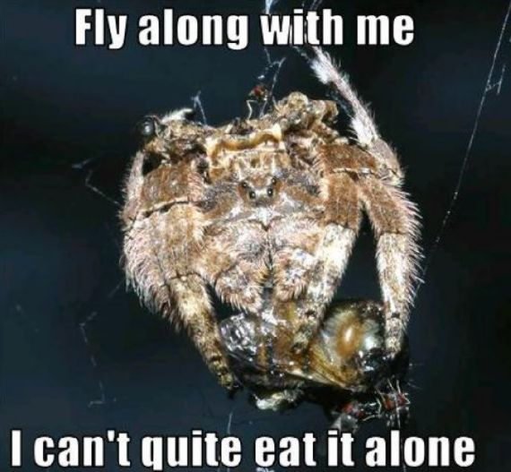 funny-spiders36.jpg