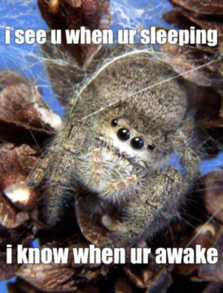 funny-spiders41.jpg