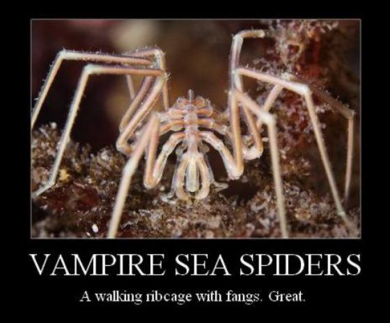 funny-spiders43.jpg