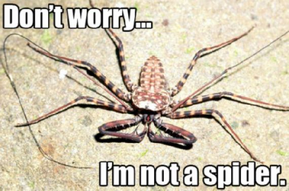 funny-spiders48.jpg