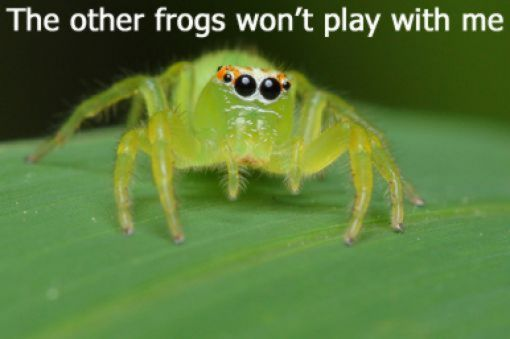 funny-spiders49.jpg