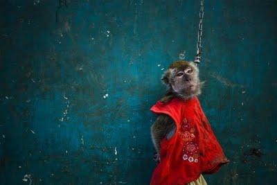 performing_monkeys_10.jpg