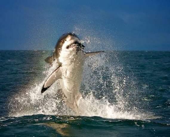 predators-and-their-preys01.jpg