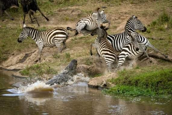 predators-and-their-preys02.jpg