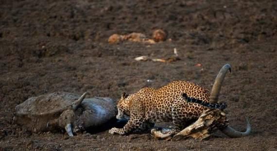 predators-and-their-preys05.jpg